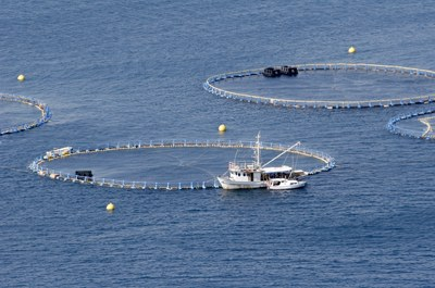 Fish farming and aquaculture